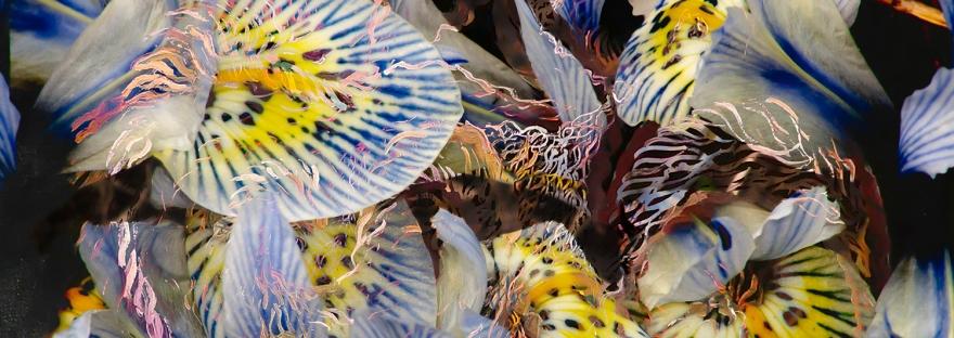 composizione astratta di petali con screziature di colore indaco e gialle con forme fluide astratte su sfondo nero