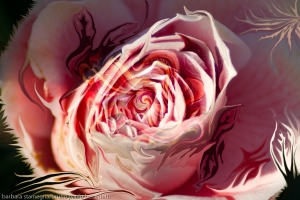 immagine astratta con vortice centrale a forma di bocciolo di rosa di colore rosa dominante e forme astratte fluide fluttuanti che richiamano forme della natura