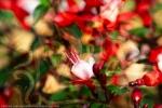 spirituale oltre visibile: composizione di arte astratta con fiori in primo piano e una figura umana sullo sfondo sfuocato
