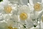veli bianchi fluttuanti con cerchi di colore giallo, sfumature di giallo e riflessi di luce da dietro
